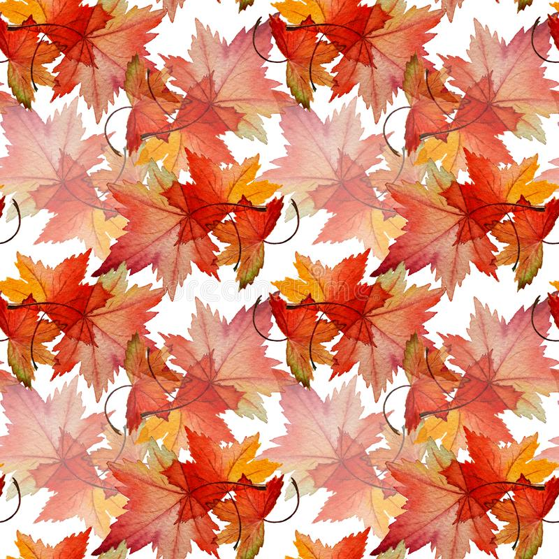 Botanical seamless watercolor pattern of autumn red leaves Acer tataricum. royalty free stock photos