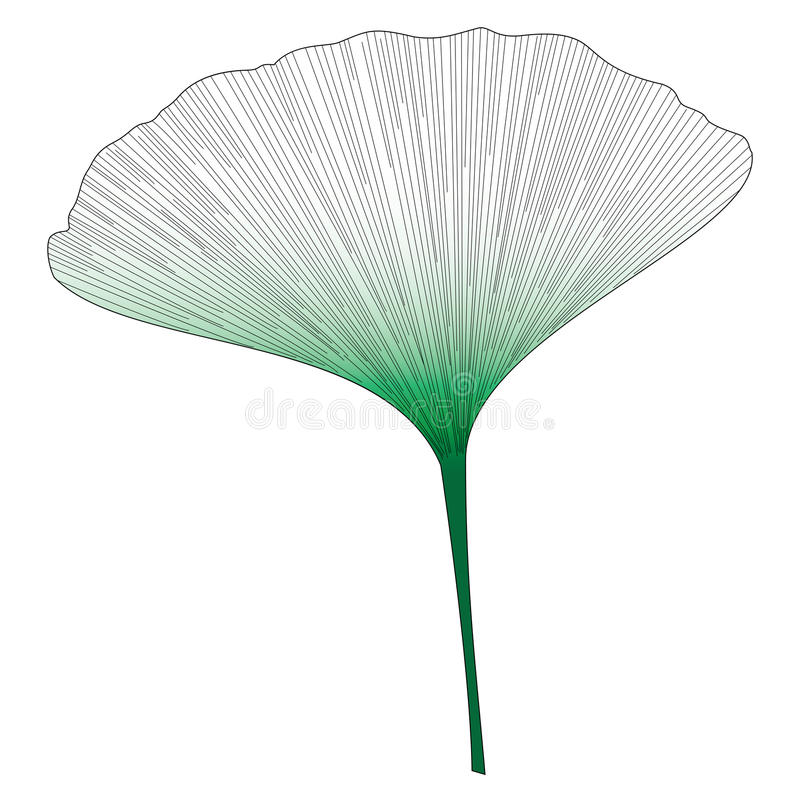 Botanical series Elegant Single Exotic leaf in sketch style in black and green gradient on white background royalty free illustration