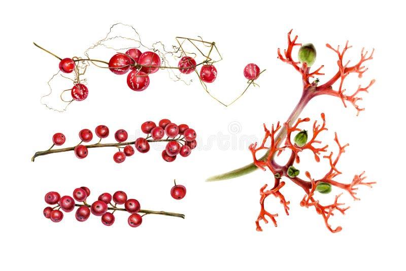 Botanical set of red plants. royalty free stock photo