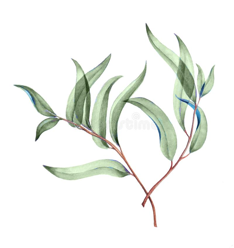 Botanical watercolor illustration of delicate green leaves. royalty free illustration