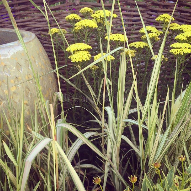 Botanicals images libres de droits