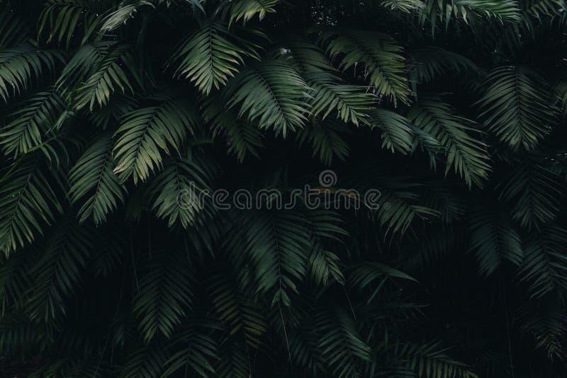 Botanicals Porto fotografering för bildbyråer