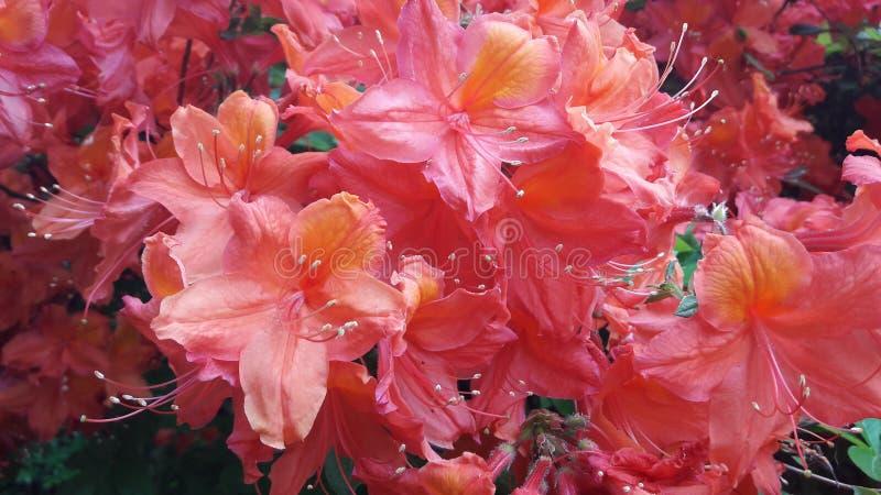 Botanicksbloemen royalty-vrije stock fotografie
