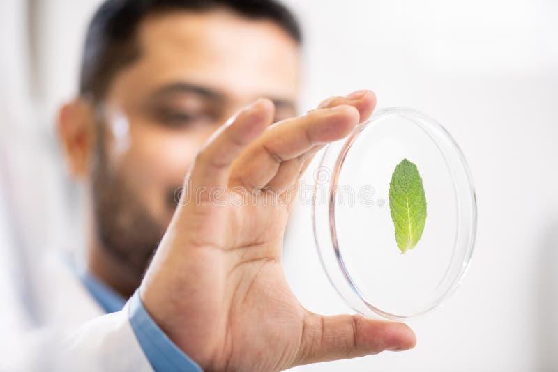 Botanico che lavora con il campione di pianta immagini stock
