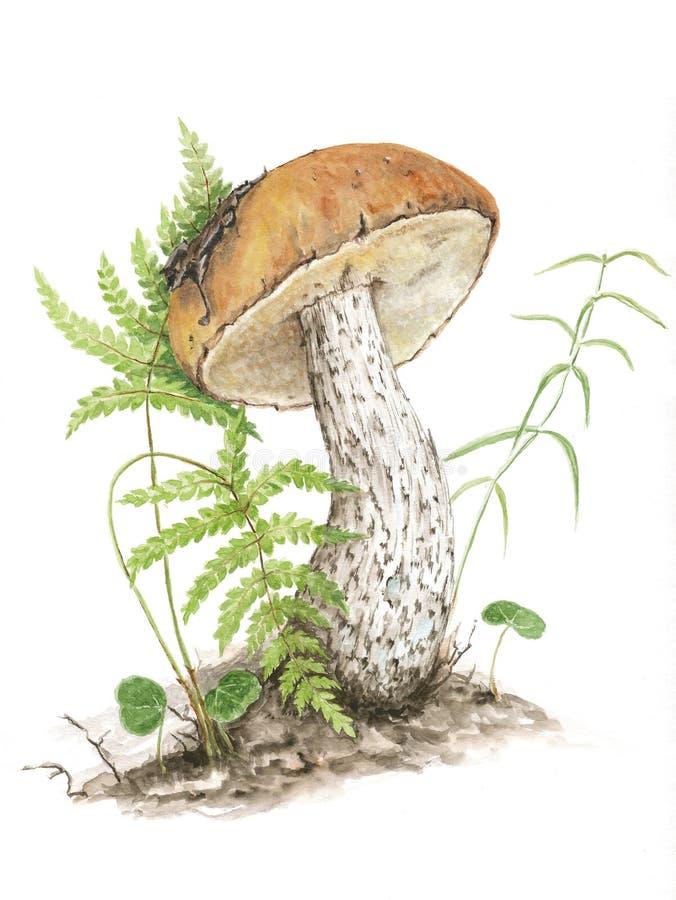 Botaniczna ilustracja Akwareli pieczarki zdjęcie stock