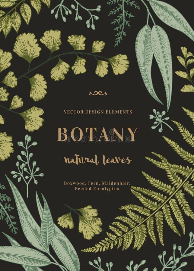 Botaniczna ilustracja z liśćmi ilustracja wektor