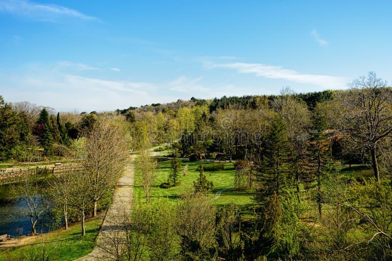 Botaniczna kolekcja komponował wyłącznie drzewa pod błękitem obrazy royalty free