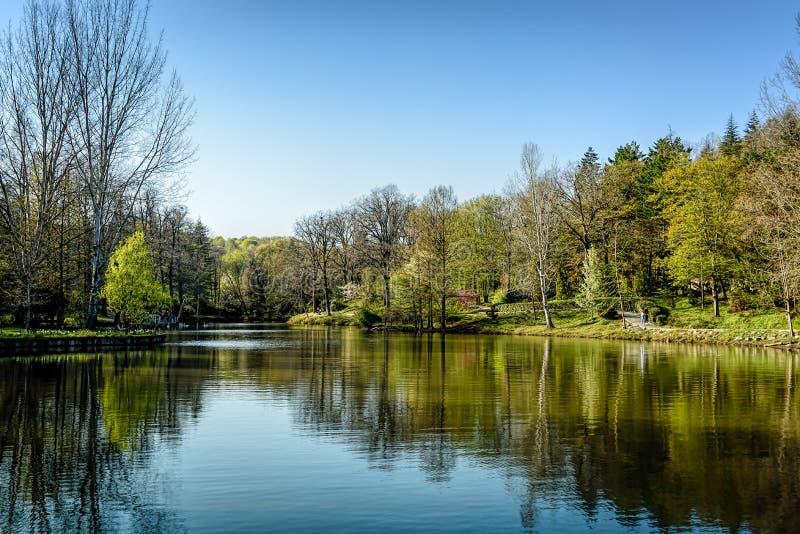Botaniczna kolekcja komponował wyłącznie drzewa przy a obraz royalty free
