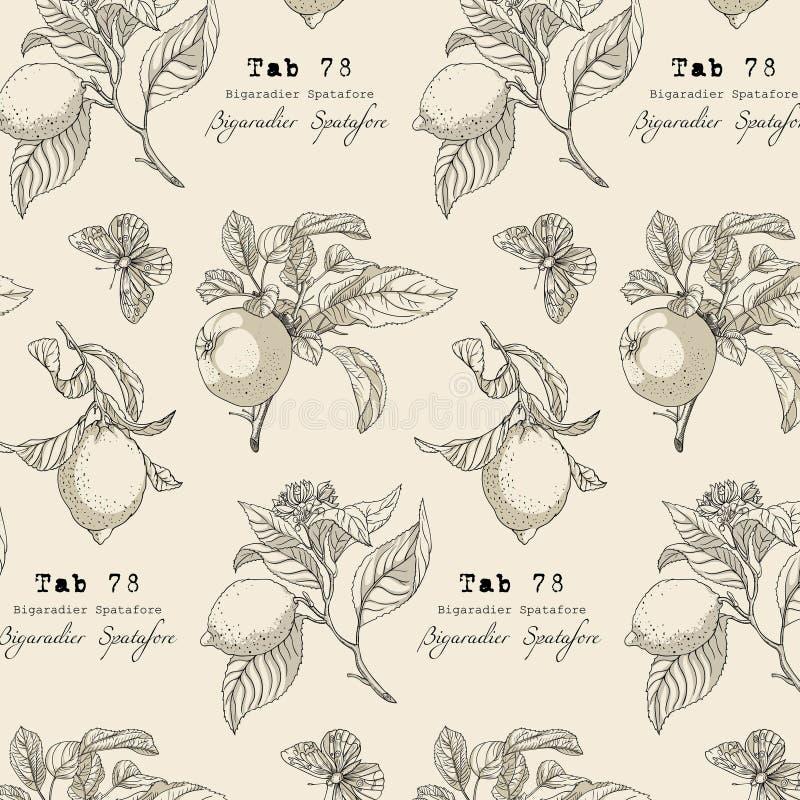Botaniczna kolekcja, uprawia ogródek projektów elementy, kwiat, liście royalty ilustracja