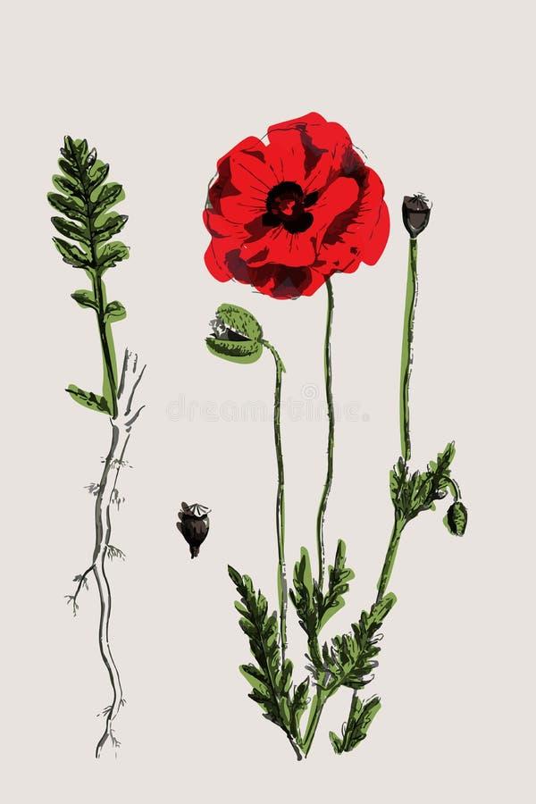Botaniczny nakreślenie obrazy royalty free