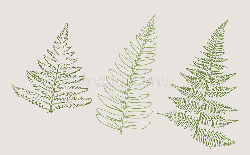 Botaniczny nakreślenie obrazy stock