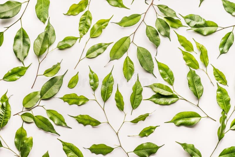 Botaniczny wzór robić zieleń liście, gałąź na białym tle zdjęcia stock