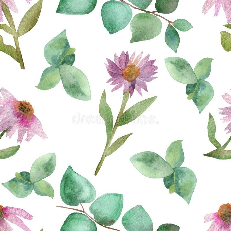 Botanicznych akwarela bujny bezszwowych menchii Echinacea kwitnący kwiaty z zieleń eukaliptusem i gałąź opuszczają odosobniony na royalty ilustracja