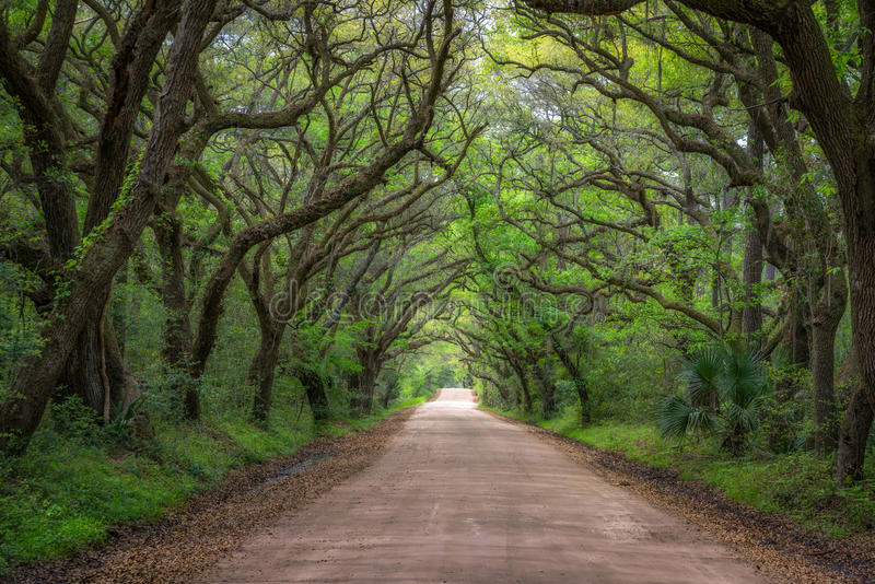 Botanik-Bucht-Straße in South Carolina stockbild