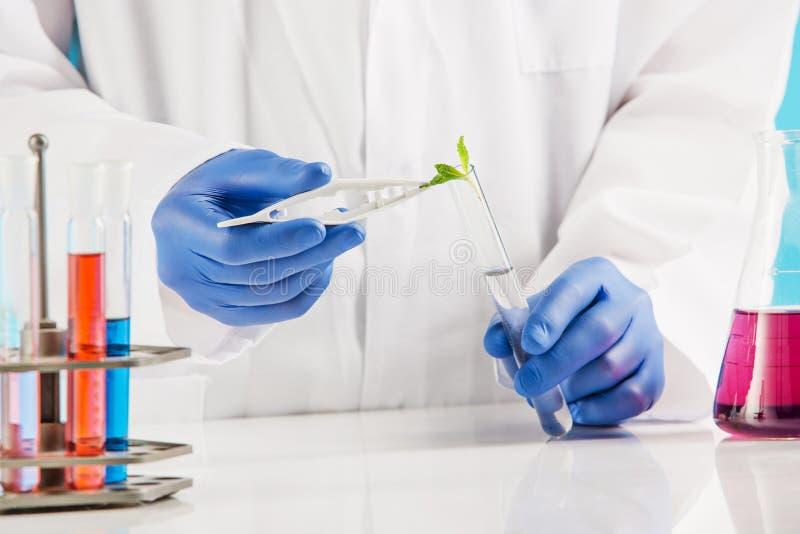 Botanik im Labor lizenzfreie stockfotografie