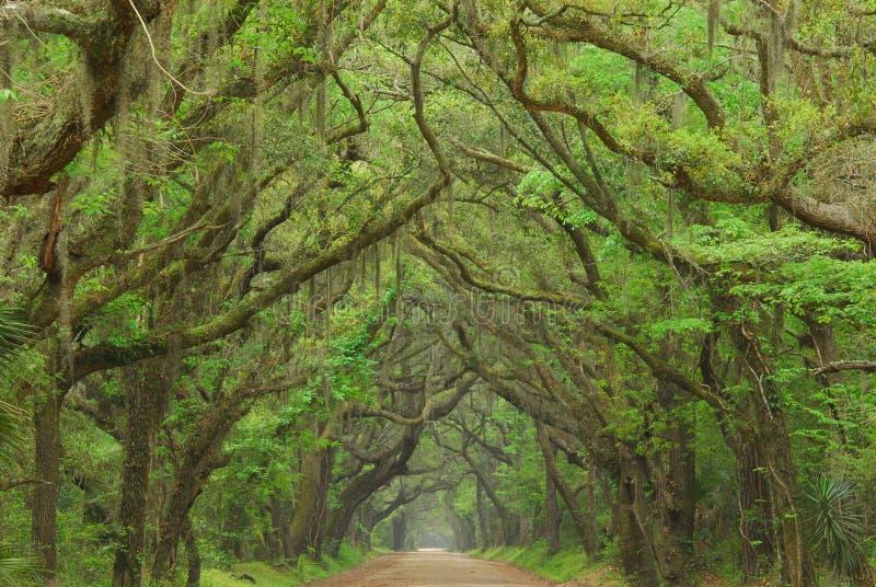 Botanik-Schacht-Straße, Charleston, South Carolina lizenzfreies stockbild