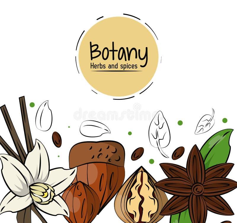 Botanika pikantność i ziele royalty ilustracja