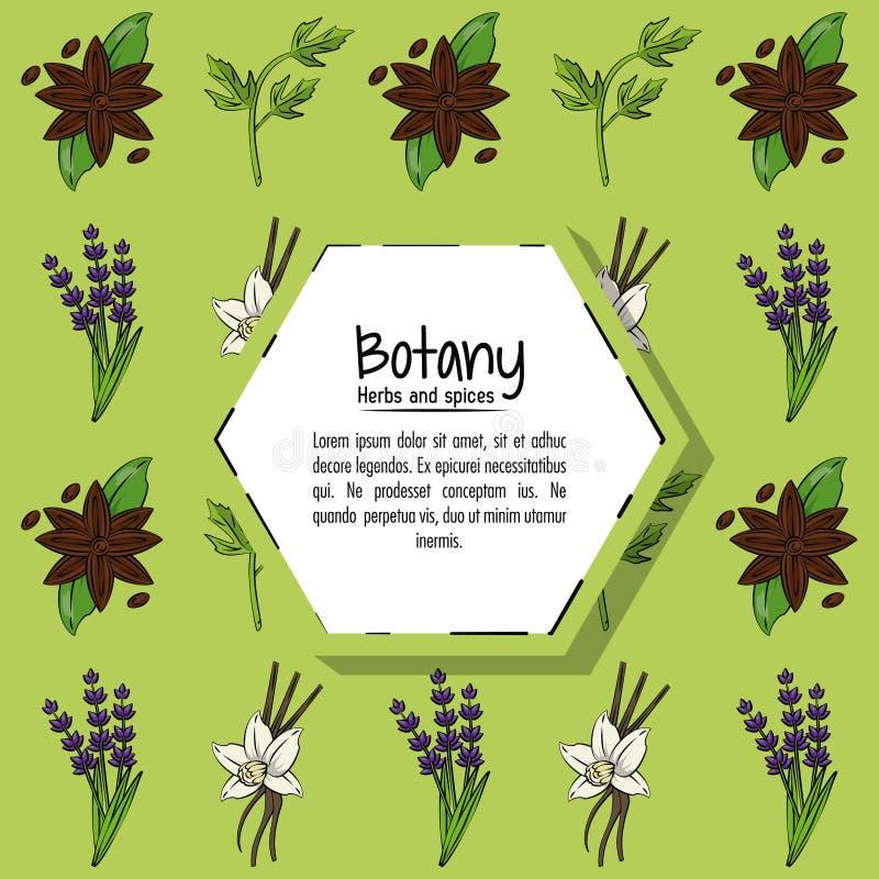 Botanika pikantność i ziele ilustracji