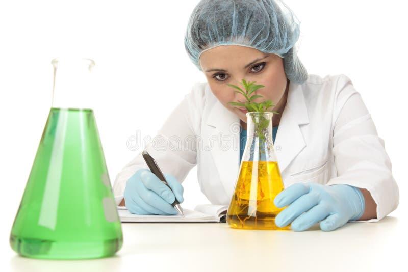 botanika rośliny naukowa studiowanie zdjęcia royalty free