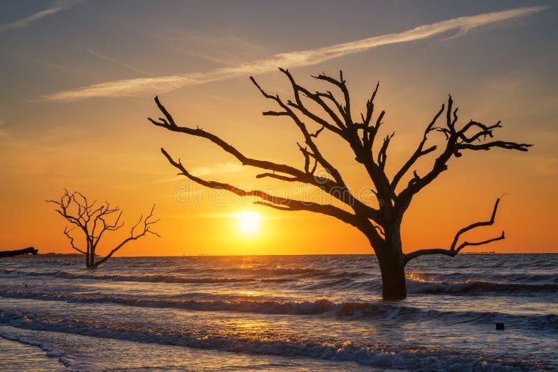 Botaniki plantaci Podpalana plaża przy wschodem słońca zdjęcia stock