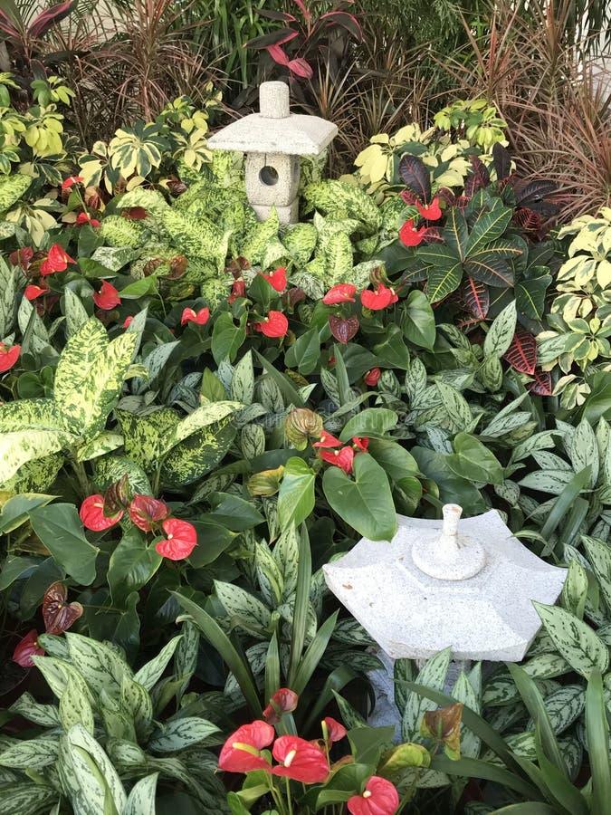 Botanisch gebied buiten een complex in Tseung Kwan O royalty-vrije stock foto's