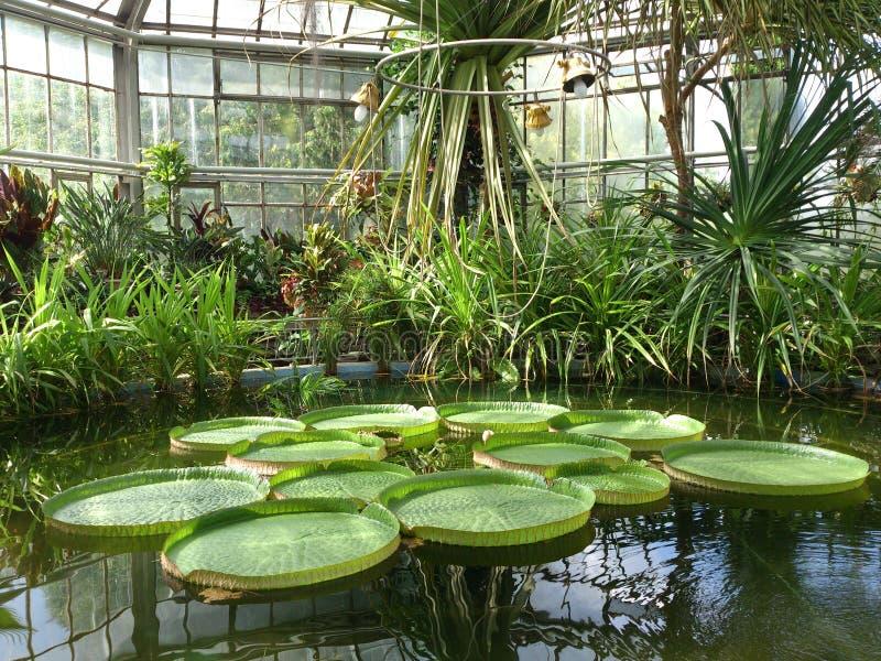 Botanisch park van Cluj Napoca stock afbeeldingen