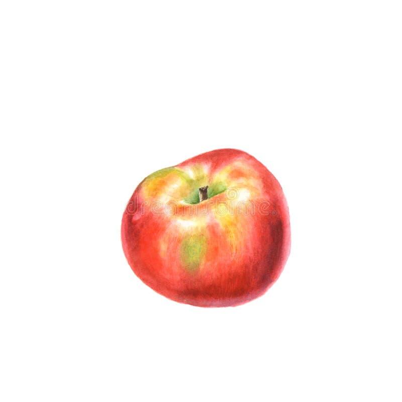 Botanische Aquarellillustration von rotem reifem Apple lokalisiert auf einem Weiß stockfoto