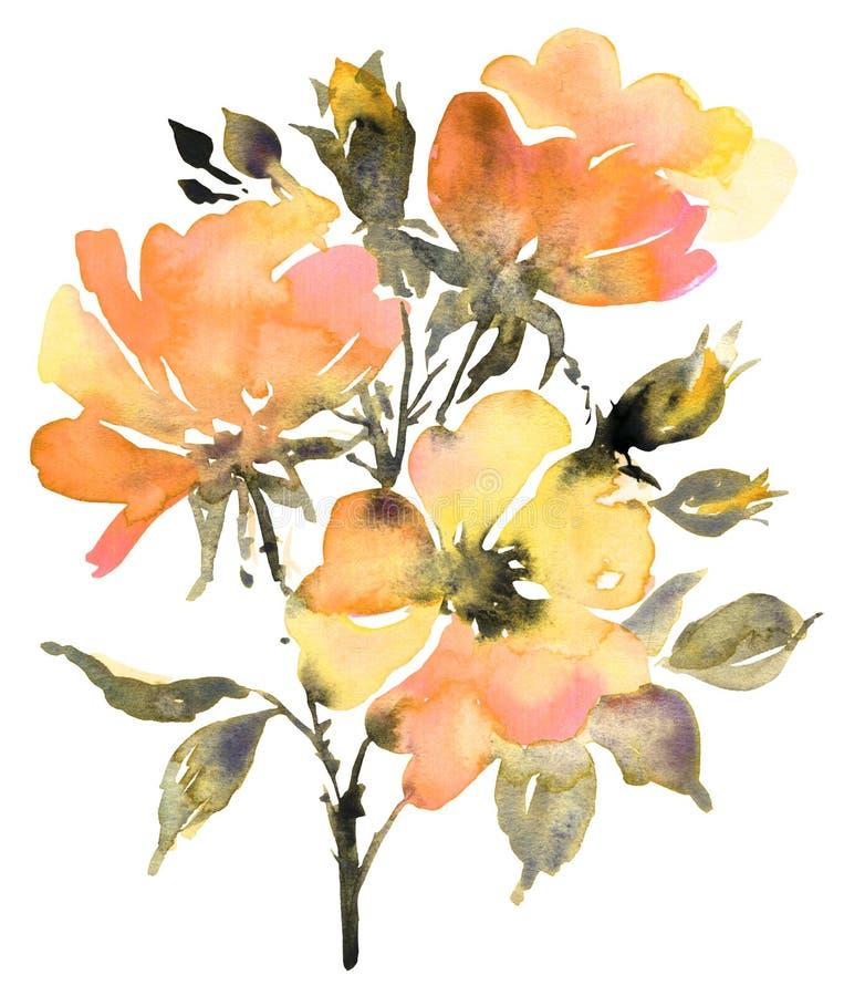 Botanische Aquarellmalerei mit Rosen blühen in der Sommerblüte lizenzfreie abbildung