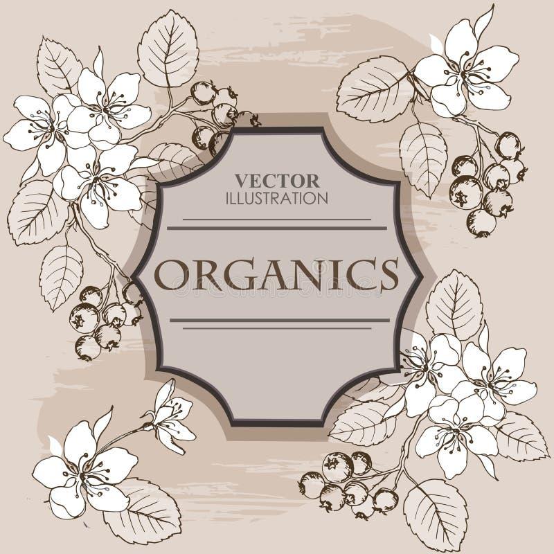 Botanische Bloemenbanner met de bessen van Saskatoon Geschikt voor de natuurlijke schoonheidsmiddelen van het ontwerpetiket, het  royalty-vrije illustratie