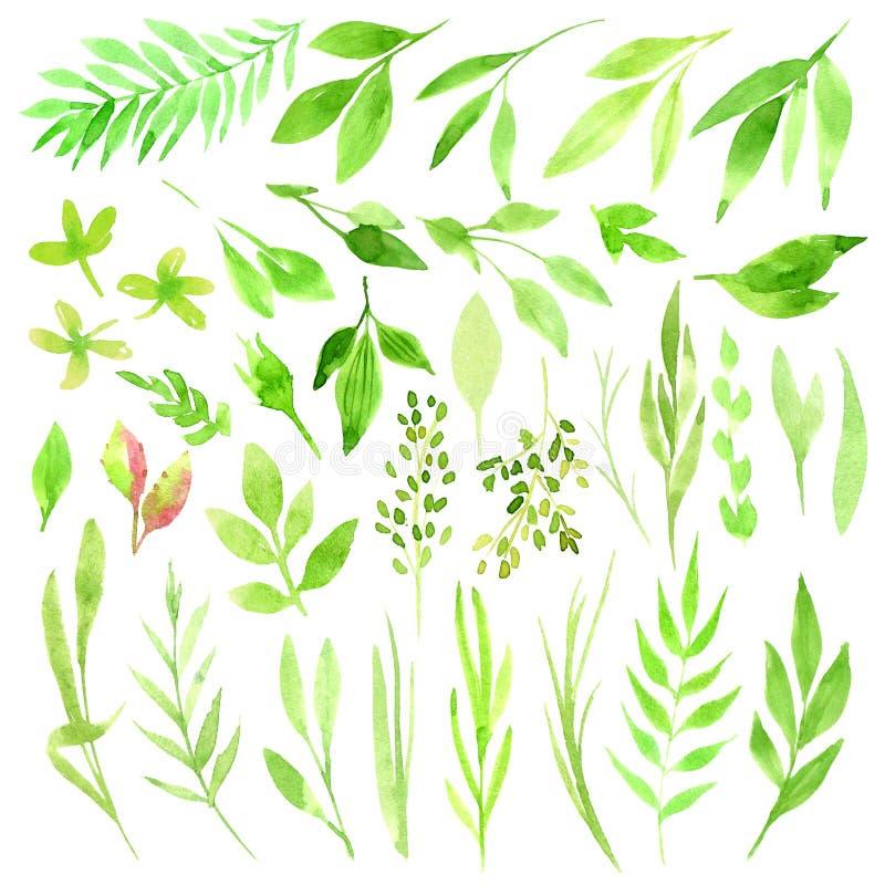 Botanische clipart Reeks Groene bladeren, kruiden en takken De grafische Elementen van het Ontwerp Perfectioneer voor huwelijksui vector illustratie