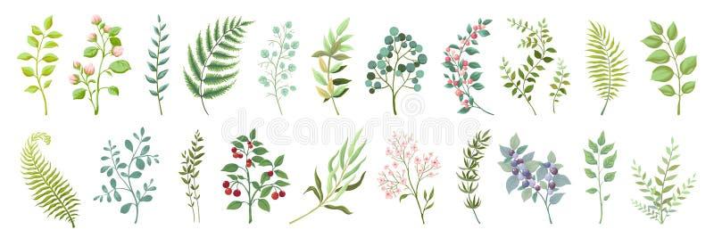 Botanische Elemente Modische wilde Blumen und grüne Sammlung der Niederlassungen, der Anlagen und der Blätter Vektorweinlesegrün  vektor abbildung