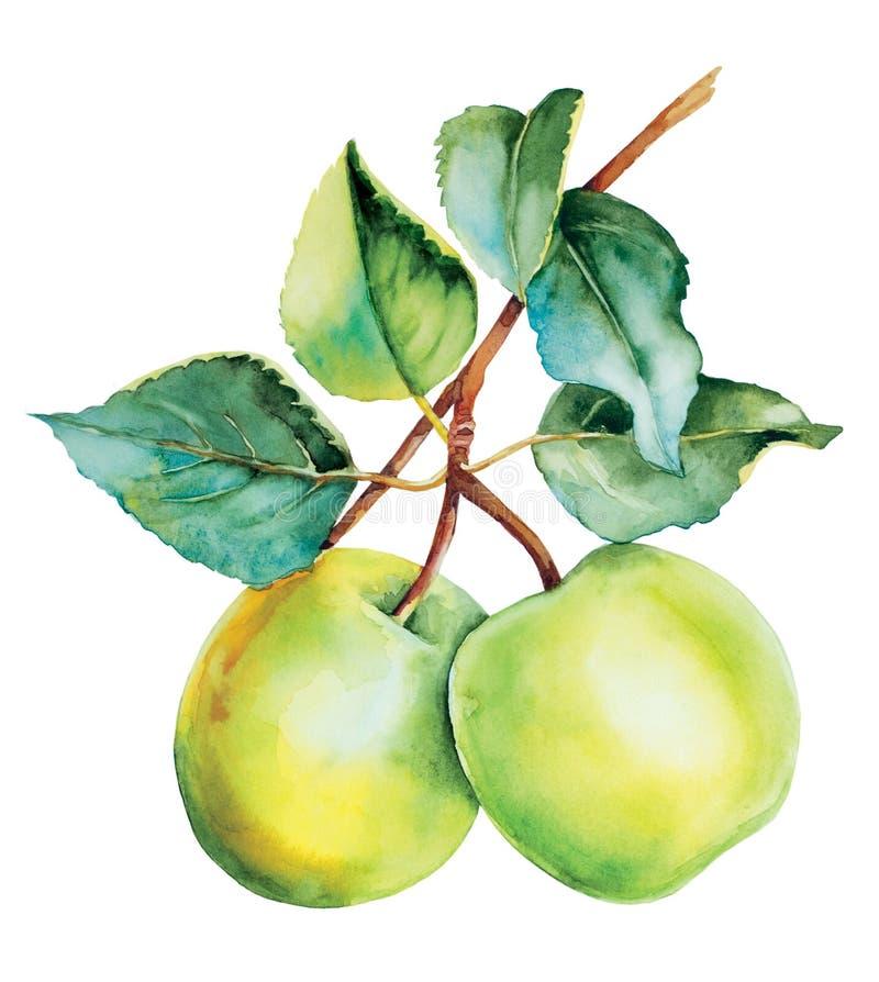 Botanische groene appelenwaterverf royalty-vrije illustratie