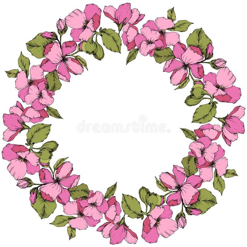 Botanische mit Blumenblume der Vektor-Rosaapfel-Blüte Gravierte Tintenkunst Feldgrenzverzierungsquadrat auf weißem Hintergrund lizenzfreie abbildung
