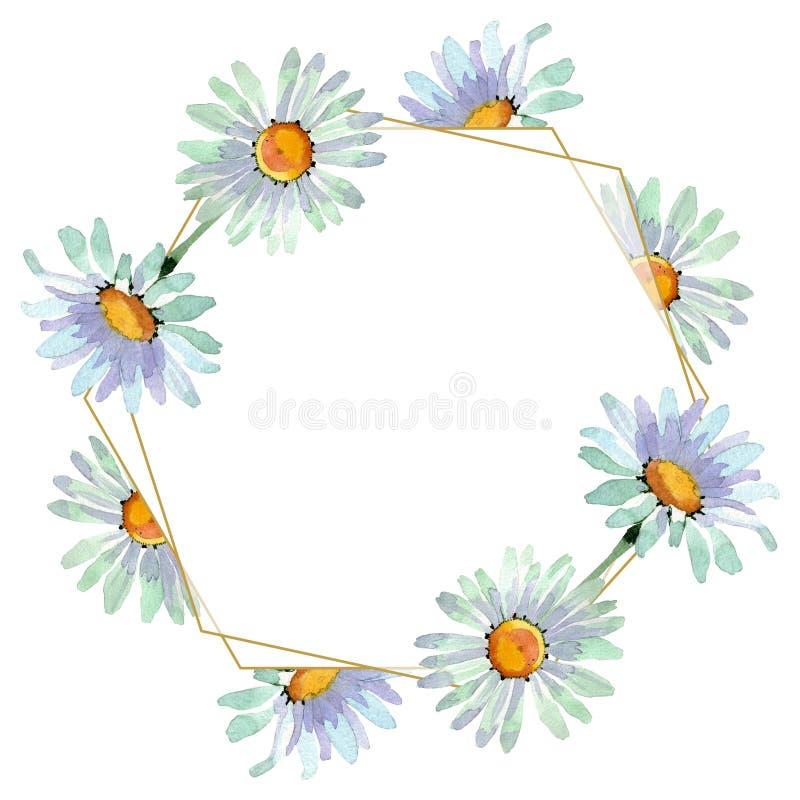 Botanische mit Blumenblumen der großen weißen Kamille Aquarellhintergrund-Illustrationssatz Feldgrenzverzierungsquadrat lizenzfreie abbildung