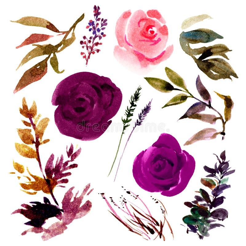 Botanische reeks geïsoleerde rozen van waterverfbourgondië, knoppen, bladeren vector illustratie