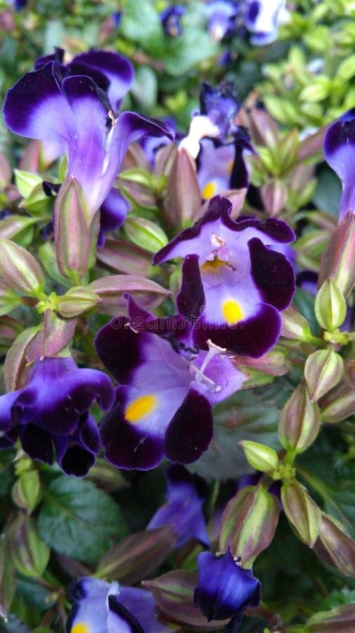 Botanische Tuin stock afbeeldingen