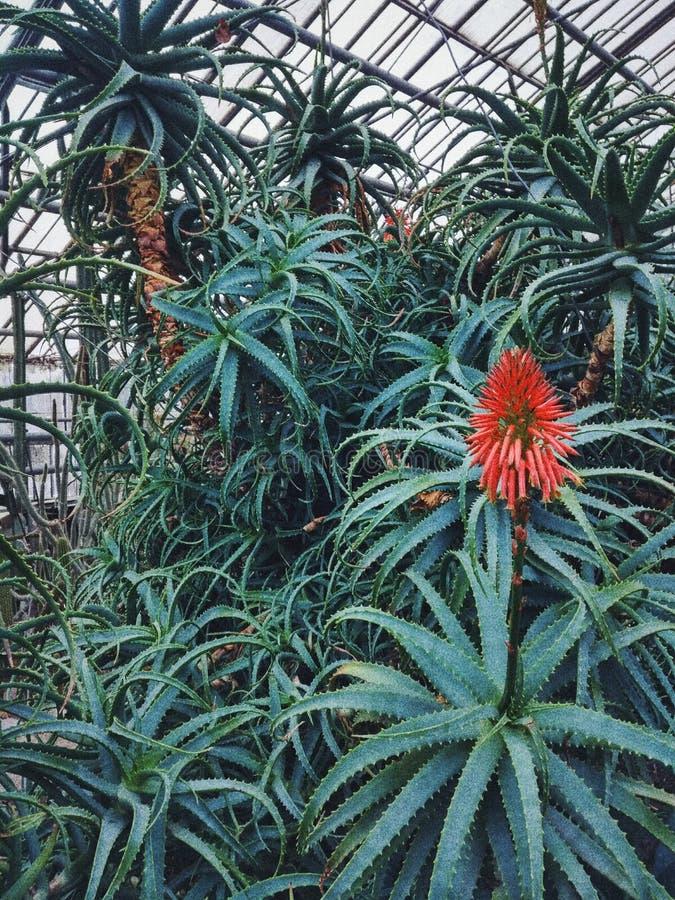 Botanische tuin, aloë, wildernis, groen royalty-vrije stock foto