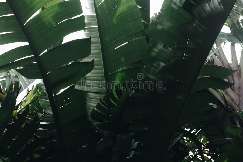 Botanische tuin porto royalty-vrije stock afbeelding