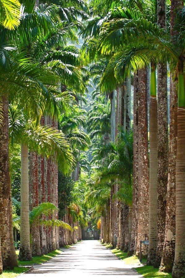 Botanische tuin. Rio de Janeiro stock foto's