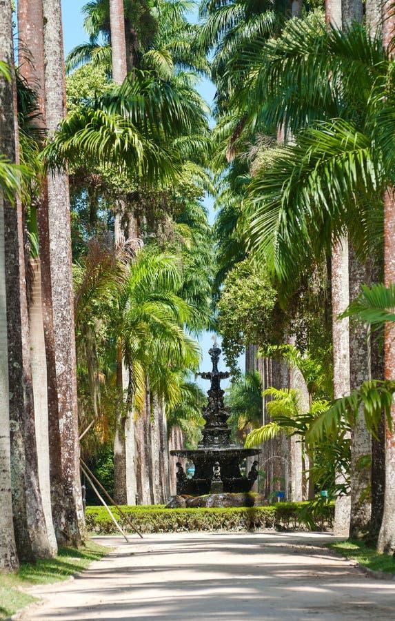 Botanische tuin in Rio de Janeiro royalty-vrije stock fotografie