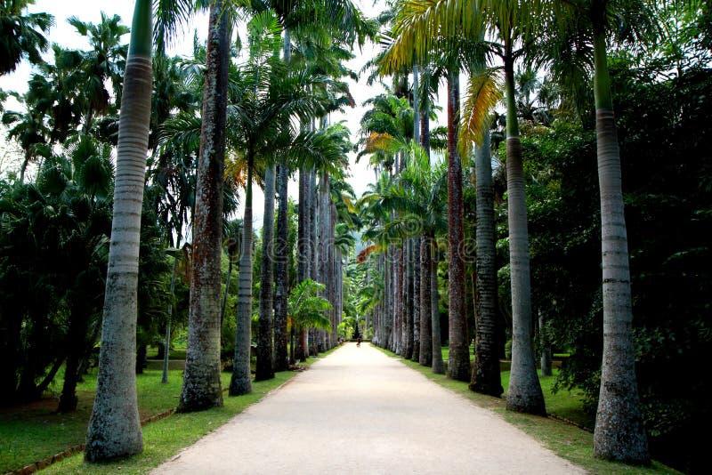 Botanische tuin in Rio de Janeiro stock foto