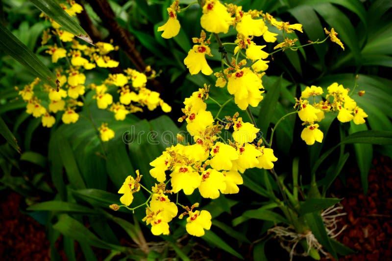 Botanische tuin in Rio de Janeiro royalty-vrije stock foto