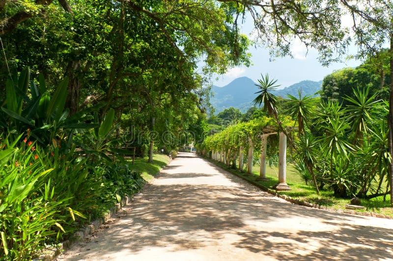 Botanische tuin in Rio de Janeiro royalty-vrije stock afbeelding