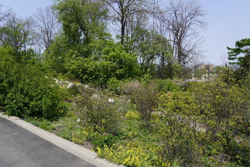 Botanische Tuin vladivostok Primorye Rusland 2019 royalty-vrije stock foto
