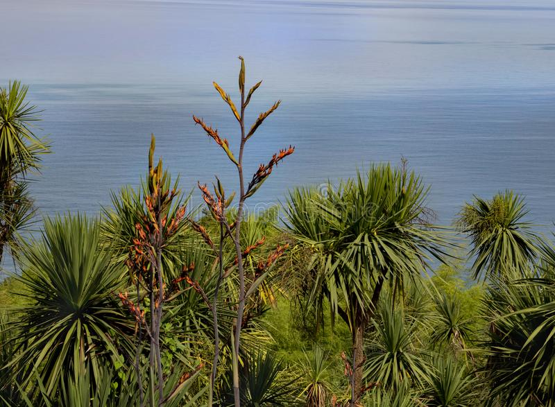 Botanische tuinen in Batumi royalty-vrije stock foto's