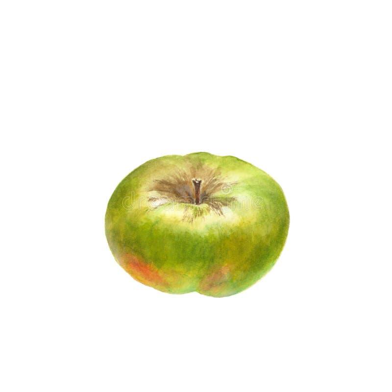 Botanische waterverfillustratie van groen rijp die Apple op een wit wordt geïsoleerd royalty-vrije illustratie