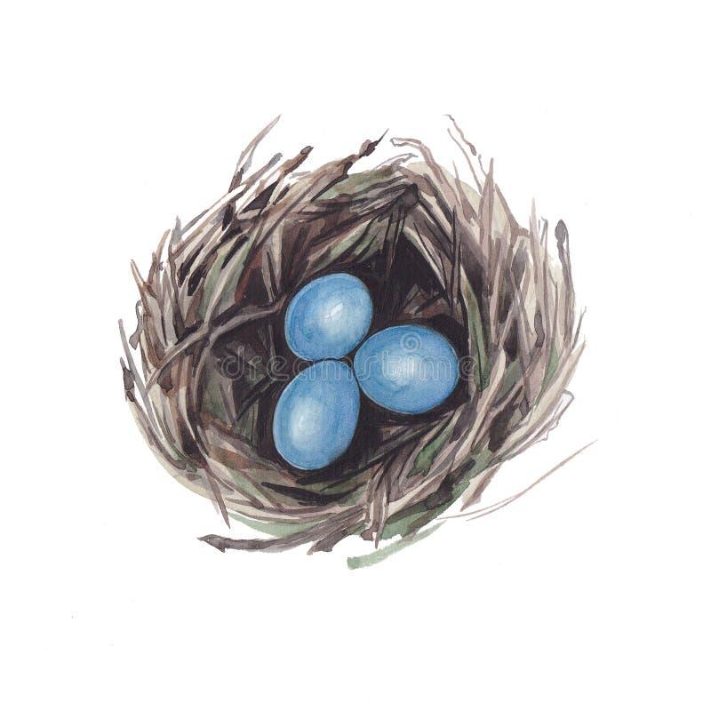Botanische waterverfillustratie van nest met blauwe eieren stock illustratie