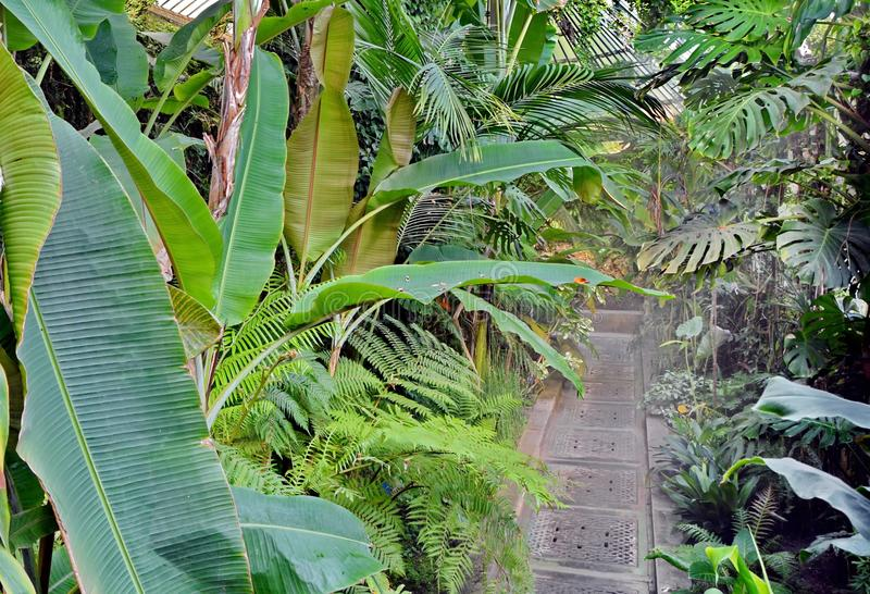 Botanischer Garten stockfotografie