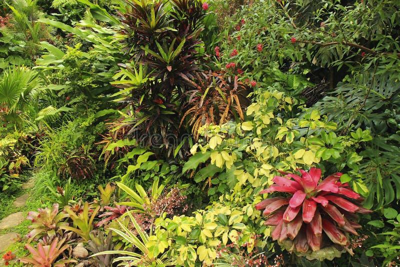 Botanischer Garten, Barbados, karibisch lizenzfreies stockbild