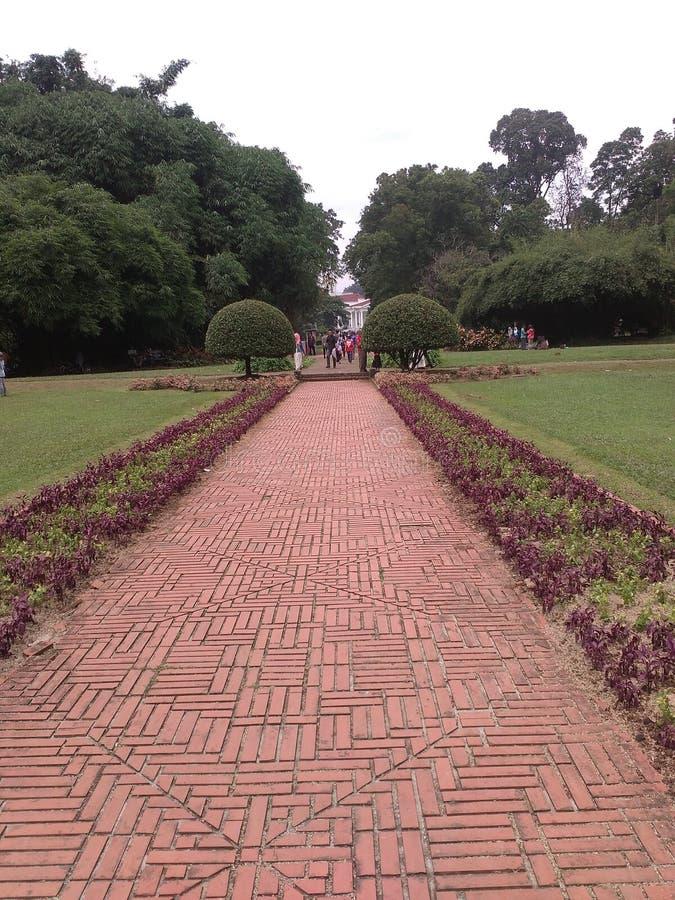 Botanischer Garten Bogors stockbilder